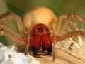 На Донбассе обнаружили смертельно опасных пауков (ФОТО)
