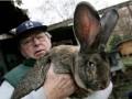 Авиакомпания United расследует гибель гигантского кролика в самолете