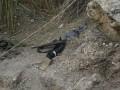 Израиль заявил о ликвидации семи боевиков на границе с Сирией