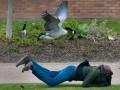 Злобная утка терроризирует студенческий городок (ФОТО)