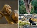 Животные недели:  объятия малышей-мангустов, орангутанг на высоте и взгляд полярной лисицы