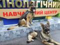 Под Львовом подготовили собак для охраны Зеленского