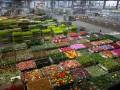Украинкам на 8 марта дарят голландские цветы - исследование