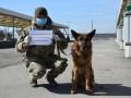 Военные закрывают Донецкую и Луганскую области на карантин
