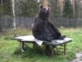Большое искусство: медведь-живописец создает дорогостоящие картины