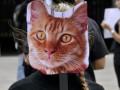 В Британии провели 12-часовую операцию по спасению игрушечной кошки