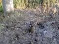 Гибридная армия РФ обстреляла Торецк