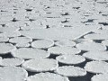 Река под Полтавой покрылась идеально круглыми льдинами
