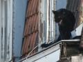 Во Франции по городу гуляла черная пантера