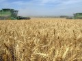 В 2012 году ЕС cтал крупнейшим импортером украинского зерна -  Минагрополитики