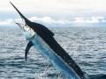 На Гавайях меч-рыба выбила рыбака из лодки и убила его