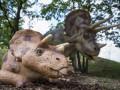 В Колорадо нашли останки трицератопса