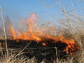 Штраф за сжигание листьев и сухостоя хотят увеличить до 40 тыс грн