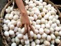 В Англии прошел чемпионат по метанию яиц