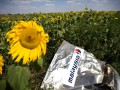 MH17: Нидерланды официально обвинили Россию