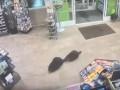 Бобры сходили в магазин