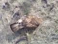Массовую гибель птиц и животных выявили в Запорожской области