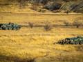 В ООС сепаратисты четыре раза нарушили тишину