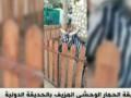В зоопарке Каира ослов покрасили и выдали за зебр