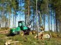 Лесные хозяйства на юго-востоке Украины могут прекратить работу