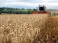 В США ожидают рекордный урожай зерновых в Украине