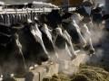 В Волынской области обнаружили неизвестный вирус у скота