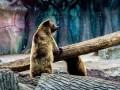 Киевский зоопарк объявил конкурс на имиджевый рисунок