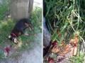 Водитель накричал на женщину с коляской и убил ее собаку