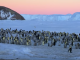 Стая пингвинят храбро отразила атаку хищника