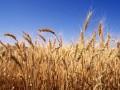 У России прекращают покупать зерно