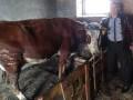 Неравнодушные украинцы помогли  многодетной семье купить корову