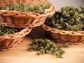 Канада может легализовать марихуану к середине 2018 года