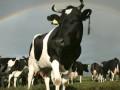 В России обнаружили влияние молока из США на появление усов у женщин