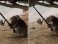 В Австралии коала нашла удочку и