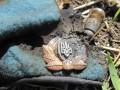 Под Иловайском обнаружили тело еще одного украинского солдата