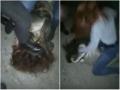 Пьяные школьницы сняли, как они жестоко бьют сверстницу