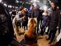 От хмурых малышей до чемпионов: в Киеве показали кошек самых разных пород