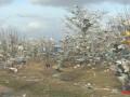 На Николаевщине тонны мусора оказались на деревьях