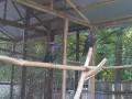 В Киеве продают под застройку дворик с воронами