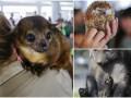 Животные недели: беззаботный ежик, скромный кинкажу и малютка-волк