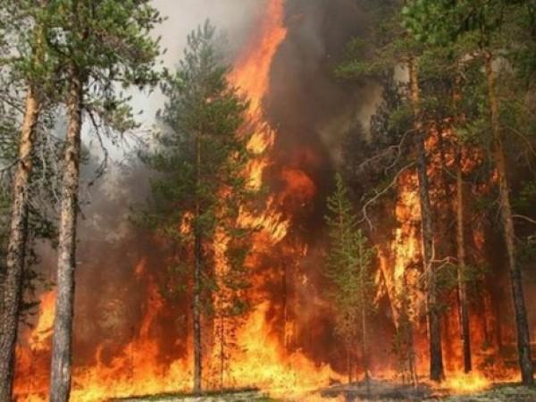 В Сибири выросла площадь лесных пожаров