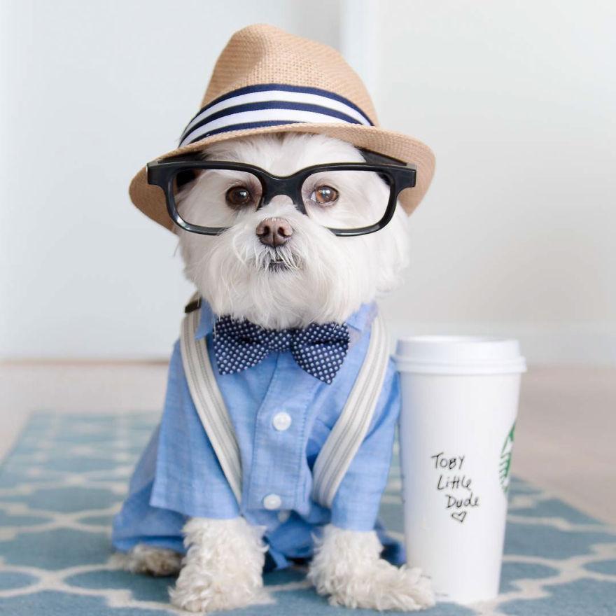 Тоби – лучший в мире щенок-хипстер