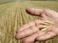 Рынок зерна может выйти из-под контроля властей  - Ъ