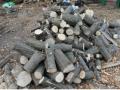 В Киеве неизвестные вырубили зеленую зону якобы для строительства парковки