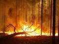 В России площадь лесных пожаров превысила 100 тыс. гектаров