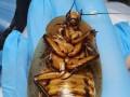 В РФ сделали операцию тараканихе с послеродовыми осложнениями