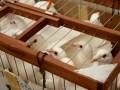 В Одессе в небо выпустили сто голубей с пожеланиями жителей города