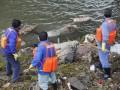 Из реки под Шанхаем извлечены 6 тысяч мертвых свиней