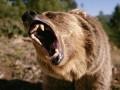 В России медведь откусил руку пьяному посетителю кафе