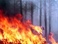 Под Северодонецком горит лес